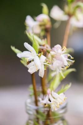 wpid14806-Picking-a-Garden-Posie-in-January-QPOS035-nicola-stocken.jpg