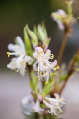 wpid14808-Picking-a-Garden-Posie-in-January-QPOS036-nicola-stocken.jpg