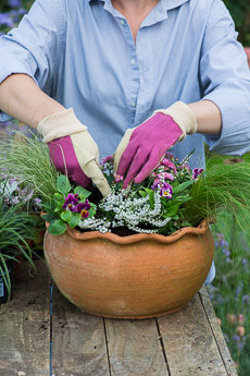 Thumbnail image for Step-by-Step Planting an Autumn Pot