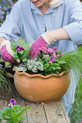 wpid14876-Step-by-Step-Plant-an-Autumn-Pot-QCON128-nicola-stocken.jpg