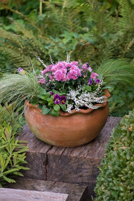 wpid14896-Step-by-Step-Plant-an-Autumn-Pot-QCON139-nicola-stocken.jpg
