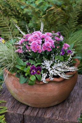 wpid14898-Step-by-Step-Plant-an-Autumn-Pot-QCON140-nicola-stocken.jpg