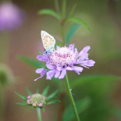 wpid14992-Butterfly-Plants-AINS014-nicola-stocken.jpg