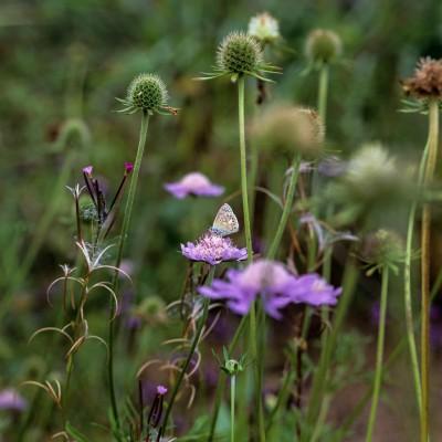 wpid14994-Butterfly-Plants-AINS015-nicola-stocken.jpg