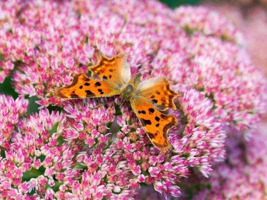 wpid14998-Butterfly-Plants-AINS037-nicola-stocken.jpg