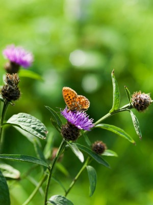 wpid15000-Butterfly-Plants-AINS061-nicola-stocken.jpg