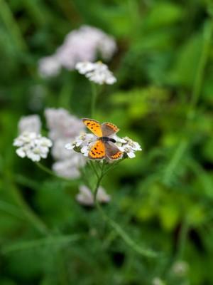 wpid15002-Butterfly-Plants-AINS081-nicola-stocken.jpg
