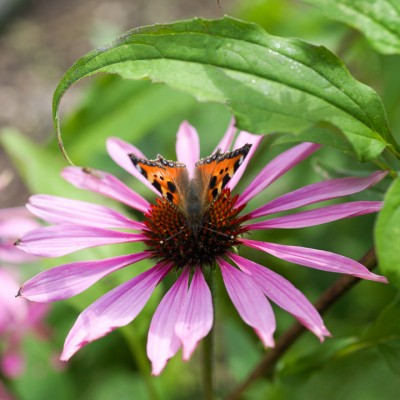 wpid15004-Butterfly-Plants-AINS088-nicola-stocken.jpg
