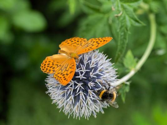 wpid15006-Butterfly-Plants-AINS092-nicola-stocken.jpg