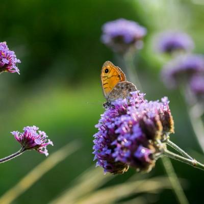 wpid15008-Butterfly-Plants-AINS094-nicola-stocken.jpg