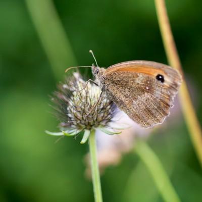 wpid15010-Butterfly-Plants-AINS107-nicola-stocken.jpg