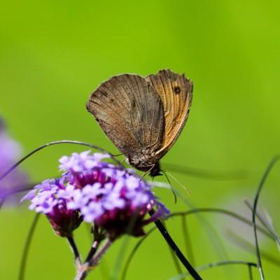 wpid15012-Butterfly-Plants-AINS109-nicola-stocken.jpg