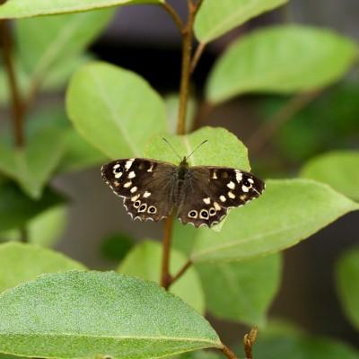 wpid15014-Butterfly-Plants-AINS110-nicola-stocken.jpg