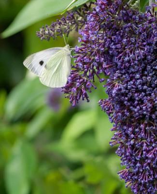wpid15016-Butterfly-Plants-AINS111-nicola-stocken.jpg