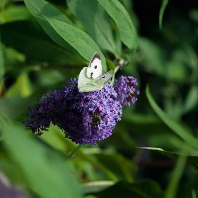 wpid15018-Butterfly-Plants-AINS112-nicola-stocken.jpg