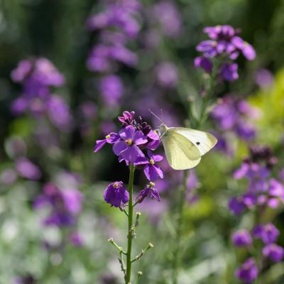 wpid15020-Butterfly-Plants-AINS113-nicola-stocken.jpg