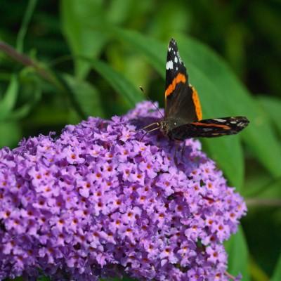 wpid15022-Butterfly-Plants-AINS116-nicola-stocken.jpg