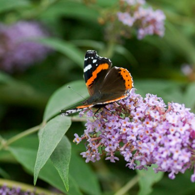 wpid15024-Butterfly-Plants-AINS122-nicola-stocken.jpg