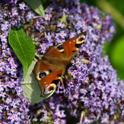 wpid15026-Butterfly-Plants-AINS127-nicola-stocken.jpg