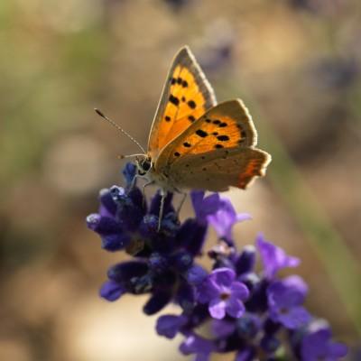 wpid15028-Butterfly-Plants-AINS130-nicola-stocken.jpg