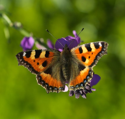 wpid15030-Butterfly-Plants-AINS131-nicola-stocken.jpg