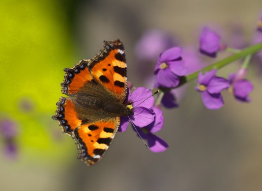 wpid15032-Butterfly-Plants-AINS133-nicola-stocken.jpg