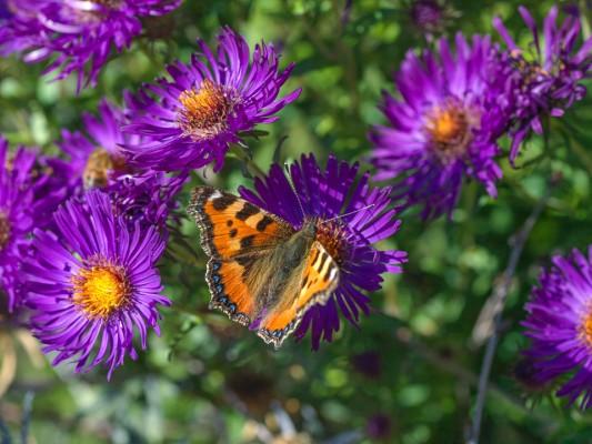 wpid15034-Butterfly-Plants-AINS141-nicola-stocken.jpg