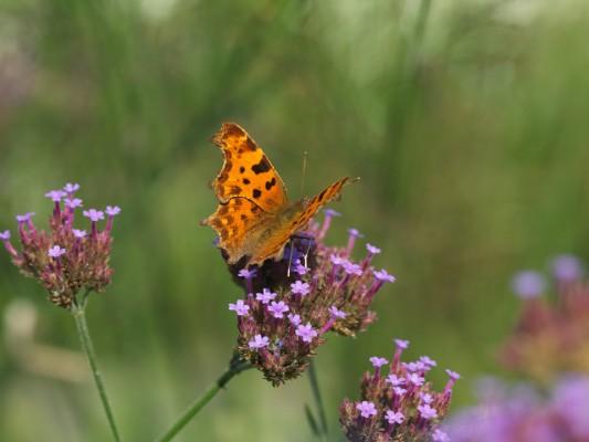 wpid15036-Butterfly-Plants-AINS144-nicola-stocken.jpg