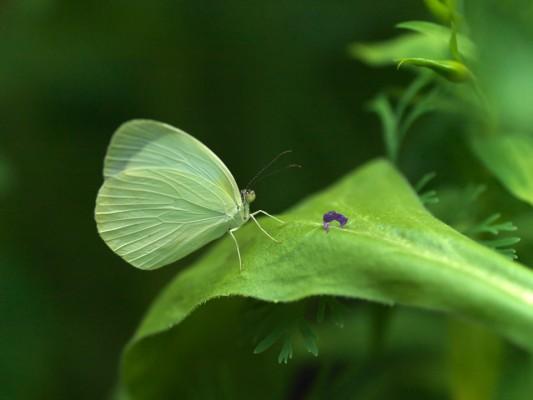 wpid15038-Butterfly-Plants-AINS145-nicola-stocken.jpg