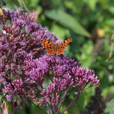 wpid15048-Butterfly-Plants-AINS156-nicola-stocken.jpg
