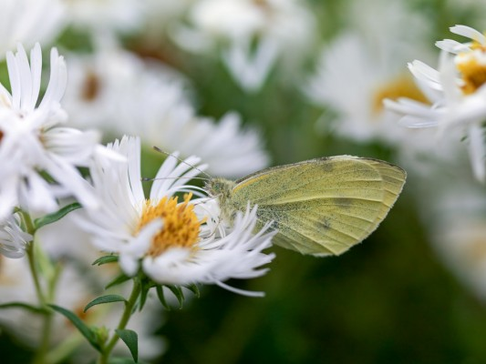wpid15050-Butterfly-Plants-GBRO016-nicola-stocken.jpg
