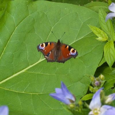 wpid15052-Butterfly-Plants-GKIM049-nicola-stocken.jpg
