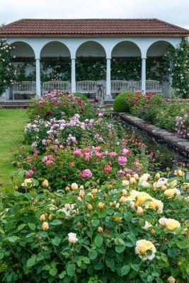 wpid15405-David-Austin-and-His-Roses-GDAV016-nicola-stocken.jpg