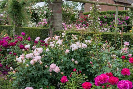 wpid15422-David-Austin-and-His-Roses-GDAV027-nicola-stocken.jpg
