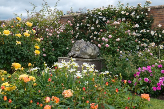wpid15434-David-Austin-and-His-Roses-GDAV040-nicola-stocken.jpg