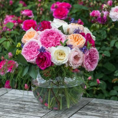 wpid15446-David-Austin-and-His-Roses-GDAV056-nicola-stocken.jpg