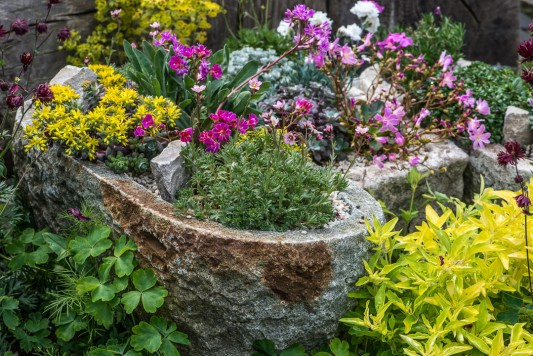 wpid15503-Planting-an-Alpine-Trough-in-May-QTRO062-nicola-stocken.jpg