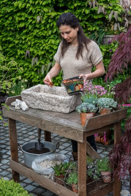 wpid15569-Trough-Step-by-Step-Planting-Alpines-QTRO023-nicola-stocken.jpg