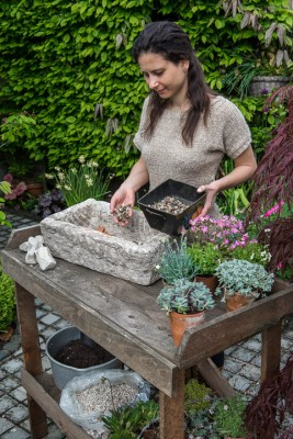 wpid15575-Trough-Step-by-Step-Planting-Alpines-QTRO026-nicola-stocken.jpg
