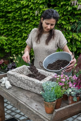 wpid15586-Trough-Step-by-Step-Planting-Alpines-QTRO031-nicola-stocken.jpg