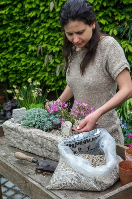 wpid15610-Trough-Step-by-Step-Planting-Alpines-QTRO043-nicola-stocken.jpg