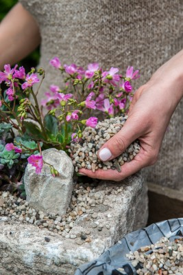 wpid15612-Trough-Step-by-Step-Planting-Alpines-QTRO044-nicola-stocken.jpg
