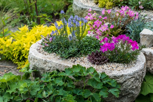 wpid15620-Trough-Step-by-Step-Planting-Alpines-QTRO053-nicola-stocken.jpg