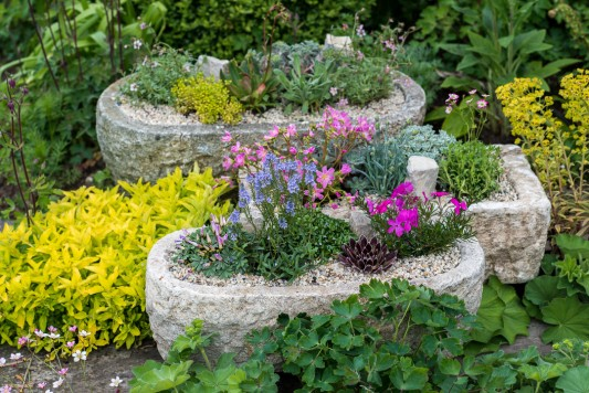 wpid15626-Trough-Step-by-Step-Planting-Alpines-QTRO059-nicola-stocken.jpg