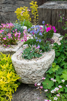 Thumbnail image for Trough Step-by-Step Planting Alpines