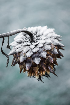 Thumbnail image for Seedheads for Winter Interest