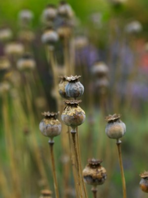wpid16079-Seedheads-for-Winter-Interest-XPAP034-nicola-stocken.jpg