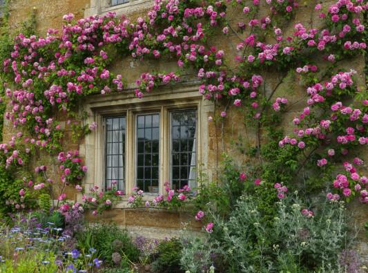 wpid16307-Summer-at-Coton-Manor-GCOT018-nicola-stocken.jpg