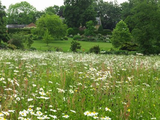 wpid16319-Summer-at-Coton-Manor-GCOT031-nicola-stocken.jpg