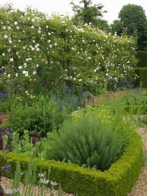 wpid16325-Summer-at-Coton-Manor-GCOT036-nicola-stocken.jpg